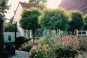 Baum Für Schattigen Vorgarten : kugelb ume f r den vorgarten ~ Markanthonyermac.com Haus und Dekorationen