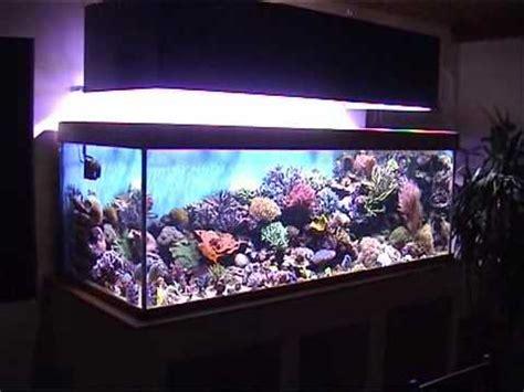 aquarium eau de mer 1000 litres wmv