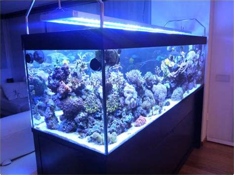 donner une vie 224 votre aquarium avec une le led toute l actualit 233 des les led