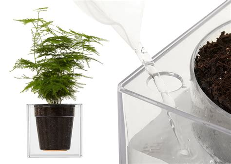 boskke clear cube self watering planter the green
