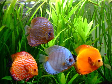 les discus discus center aquarium