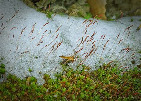 26 Best Images About Moss Is Magical On Pinterest How To Fix A Leaking Roof Vent Pipe Mitsubishi Outlander Racks Nz Repair Damaged Shingle Spray Paint Much Shingles Red Inn Farmington Hills Mi Reviews Average Replace Design Shed Trusses