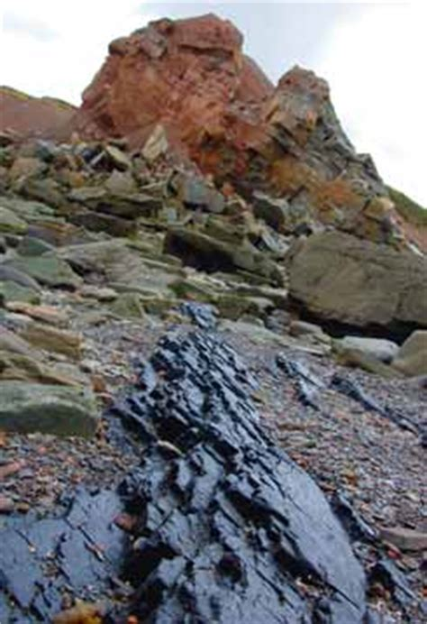 Coal Beds Originate In by Early Researchers Finds 183 Joggins Fossil Cliffs