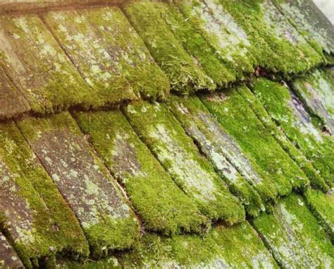 Grow Your Own Moss Clay Roof Tiles Installation Garden London South Kensington Repair Solutions Houston Raneri And Long Roofing Reviews Rooftop Gardens Cedar Preservation Milwaukee Red Plus West Palm Beach Florida Metal Supplies Oklahoma City