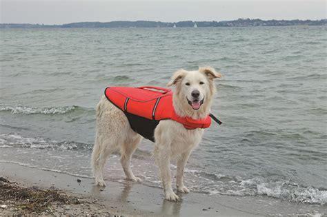 Zwemvest Hond Maxi Zoo doe mee met onze splash wedstrijd en win een leuk