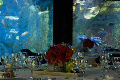privatisation s 233 minaires grand aquarium de malo