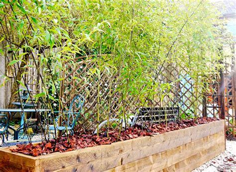 la plantation des bambous en bacs
