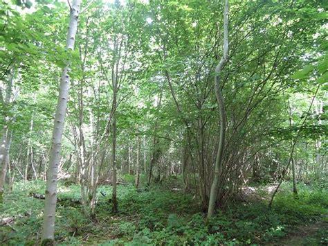 vente terrain ticheville a vendre ticheville parcelle de bois