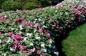 Die Schönsten Balkonpflanzen : die sch nsten balkonpflanzen f r den schatten ~ Markanthonyermac.com Haus und Dekorationen
