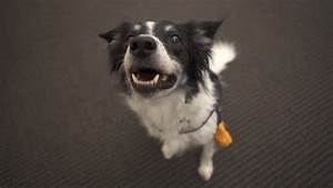 If dogs could talk, this is what they would say - CNN.com
