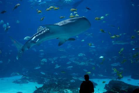 aquarium d amn 233 ville