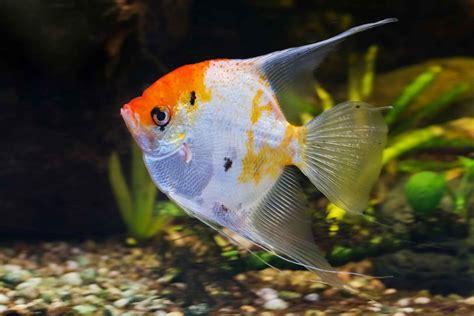 materiel d aquariophilie 13001 sarl tropical poisson vivant marseillle centre 13