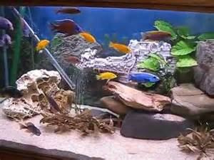 aquarium 600 l en cichlid 233 s du malawi