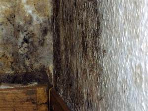 Schimmel An Möbeln : schimmel im wohnraum ~ Markanthonyermac.com Haus und Dekorationen