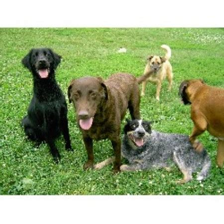 bed biscuit doggie daycare and boarding sioux city iowa 51103