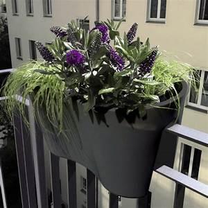 Blumentopf Für Geländer : blumentopf f r gel nder rephorm steckling duo graphit modern blumenk bel t pfe other ~ Markanthonyermac.com Haus und Dekorationen