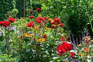 Gräser Kübel Terrasse : rosen im k bel auf balkon und terrasse ~ Markanthonyermac.com Haus und Dekorationen