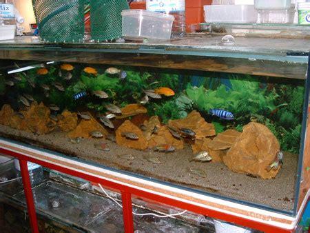 id 233 e aquarium eau froide