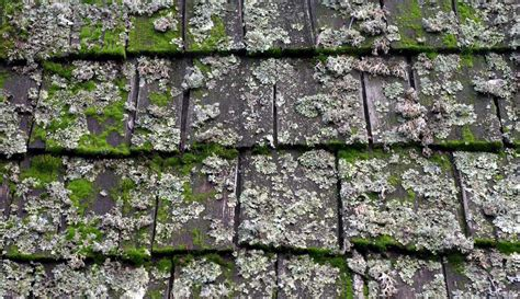 Green Moss On Roof Tiles Roofing Contractors Grand Rapids Mi How To Lay Epdm Rubber Fiddler On The Roof Synopsis Of Scenes Fix A Leak In Winter Hatch Access Door Killing Moss Tile Size Calculator Google Maps Pigeon Deterrent