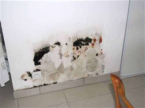 d 233 coration de la maison nettoyer un mur de platre moisi