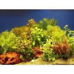 lot de plantes color 233 es pour aquarium 192 prix avantageux chez zooplus