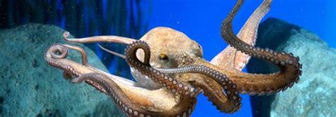 visiter l aquarium de barcelone
