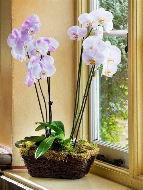 17 meilleures orchid 233 es sur soin pour les