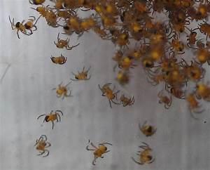 Spinnen Fernhalten Wohnung : spinnen in der wohnung spinnen in der wohnung dravens tales from the crypt b h mit diesen 5 ~ Whattoseeinmadrid.com Haus und Dekorationen