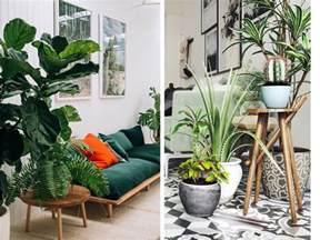 zoom sur les plantes d int 233 rieur faciles d entretien et tr 232 s d 233 co decouvrirdesign