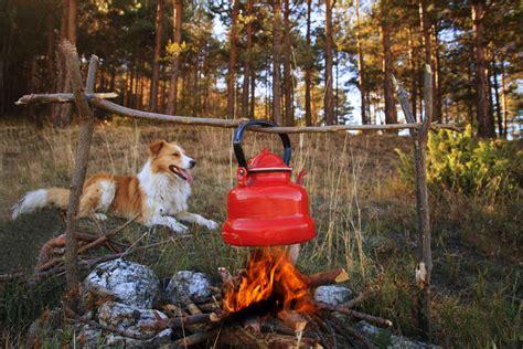 Petfriendly Camping In Queensland