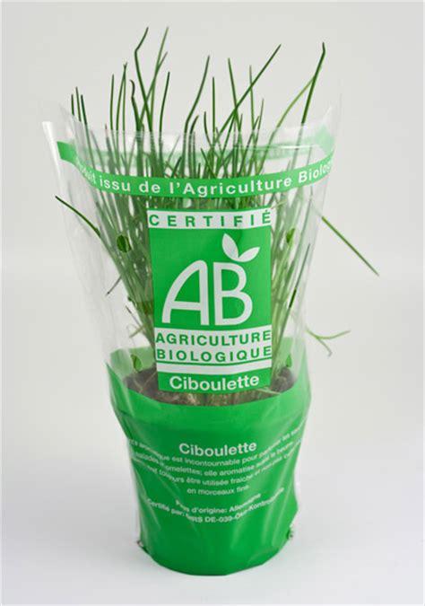 premiers achats de plants et de graines un potager bio