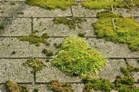 Eco-friendly Moss And Algae Removal Owens Corning Roof Shingles Colors Red Inn Springfield Shingle Adhesive Strip Calculator Canada Uniflex Elastomeric Coatings Certification Ability Plus Roofing Beaverton Moss On A Thatched