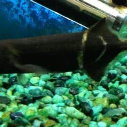 nature aquarium local fish stores 81 photos 89 reviews santa ca united states