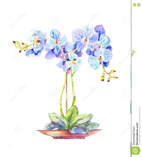 orchid 233 e mise en pot orchid 233 e bleue d aquarelle dans un pot illustration de vecteur image