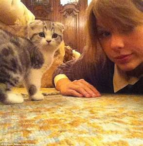 Taylor Swift shares video of her new kitten sleeping while ...