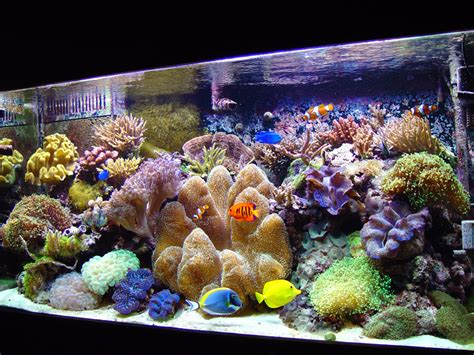 simple and effective guide on reef aquascaping reef builders the reef and marine aquarium