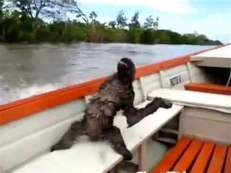Boat Ride Comedy Youtube by Sloth Cool Chillin On A Boat Ride Youtube