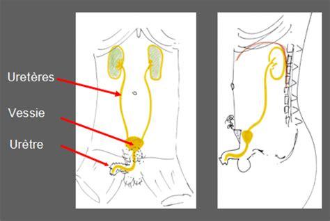 vessie pour des lanternes 28 images expression prendre des vessies pour des lanternes 183