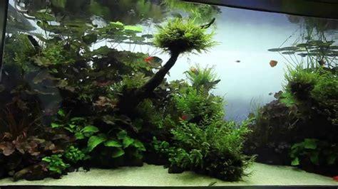 image gallery aquascape designs