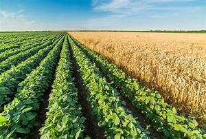 GMO: Pros and Cons- Are they worth it? We take a look.