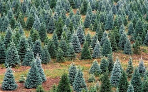 Get The Most Out Of Your Tree After Xmas