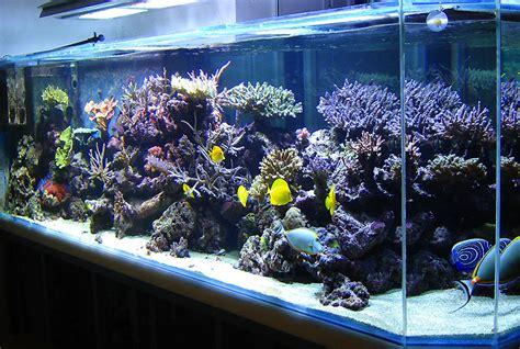 l aquarium de 3m de laurent