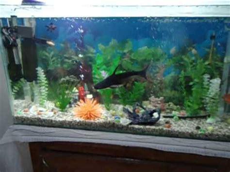 mon requin d aquarium shark fish avi