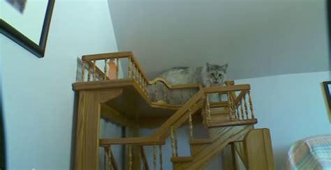 un homme transforme sa maison en un paradis pour chats vid 233 o etrange et insolite