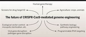 The new frontier of genome engineering with CRISPR-Cas9 ...