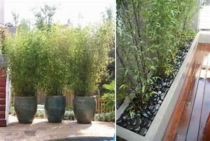 Immergrüner Sichtschutz Im Kübel : schwarzer kies im bambus k bel f r gute drainage garten pinterest garten bambus und terrasse ~ Whattoseeinmadrid.com Haus und Dekorationen