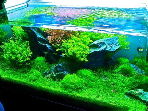 entretiens d aquariums d eau douce entretien d aquarium