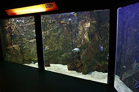 reportage sur la visite de l aquarium de lyon