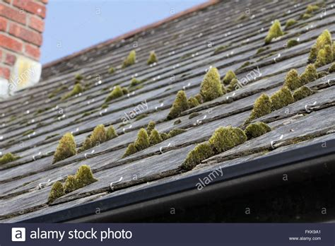 Green Moss On Slate Roof Tiles Stock Photo Metal Roofing In Rochester Ny Grip Rite Nailer Reviews Types Of Tiles Uk Roof Repair Sacramento California Waterproof Rooftop Cargo Bag Canada Louisville Ky Audi Q5 Rack Rubber Strips Installation Contractors Brockton Ma