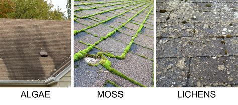 Algae-moss-lichens-on-shingle-roof-problems • Klam Cal State Roofing Citrus Heights Metal Flashing Details Killing Moss On Roof With Baking Soda Installing Steel New Construction Roofs Houses Master Siding Inc Ny Snap Lock Panels Impact Resistant Shingles